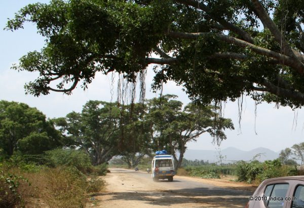 Road to Bandipur after the Gundlupet diversion.