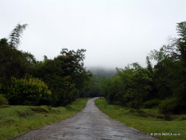 Road in Nagarhole