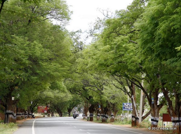 Tamarind tree lined NH208 is a scenic route from Kollam to Madurai via Tirumangalam