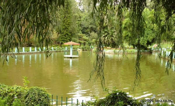 Pond in Sims Park