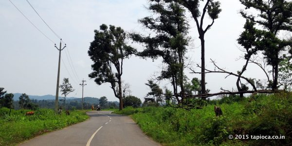 Road in Wayanad on the way to Thirunelli