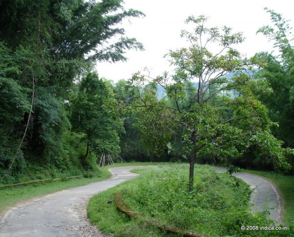 Road towards Guest House area in Indira Gandhi National Park.