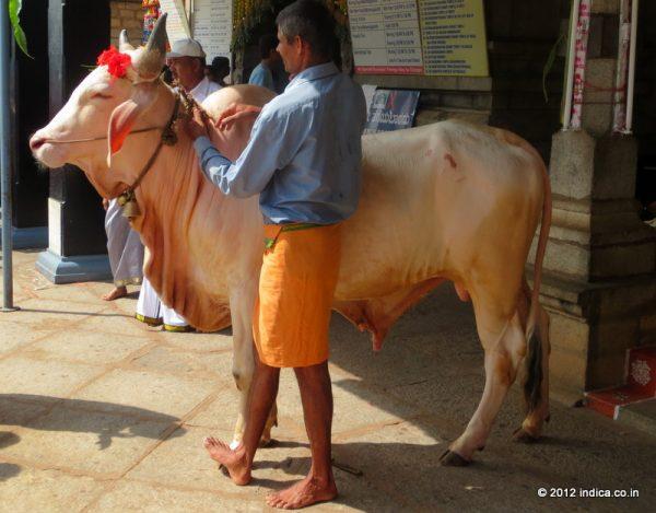 Bull at Sringeri temple.